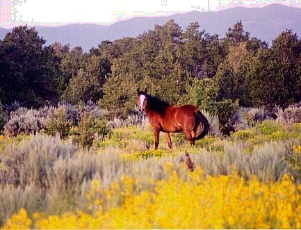 Boulder Horse properties for sale